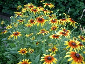 Vähest hoolt nõudev taimeplaneering e. laiskuri aed