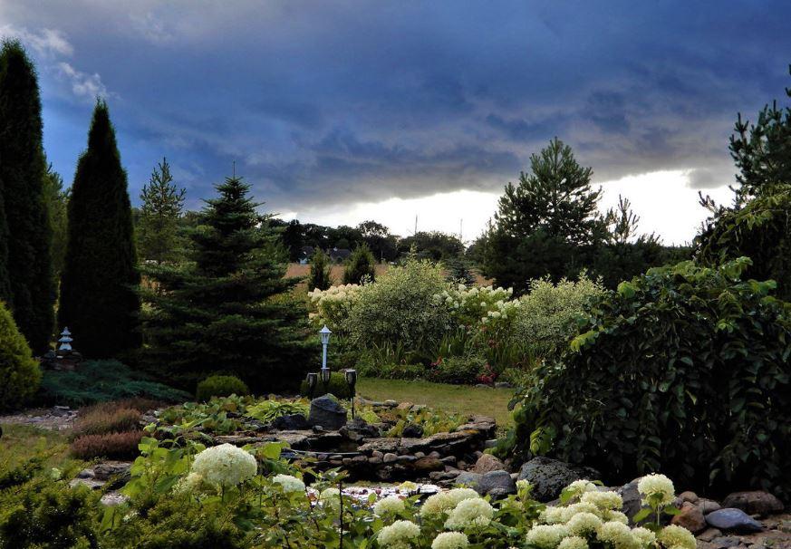 Nõmmiku hobihäärber_est_garden_foto